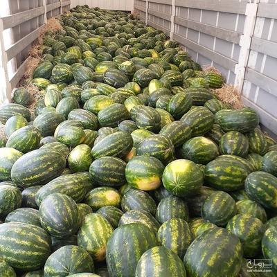 فروش هندوانه گرد