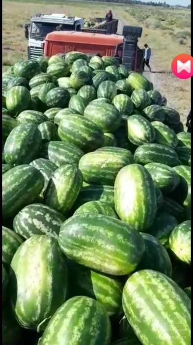 فروش هندوانه بیضی B32 درجه یک زهکلوت