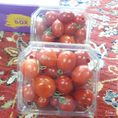 فروش گوجه فرنگی گیلاسی