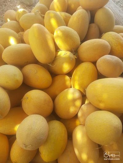 فروش ملون راک زرد