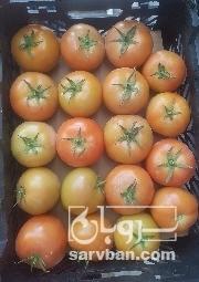 خرید گوجه فرنگی