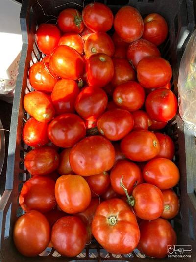 فروش گوجه فرنگی  نانهمز | سروبان