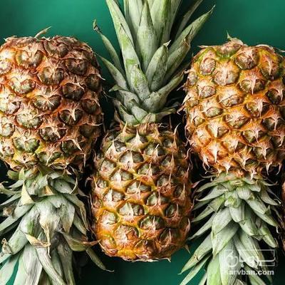 فروش آناناس | سروبان