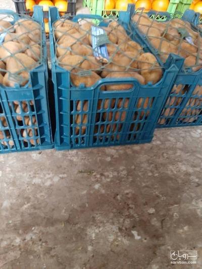 قیمت خرید عمده  کیوی
