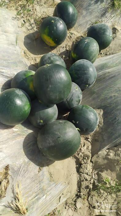 فروش هندوانه