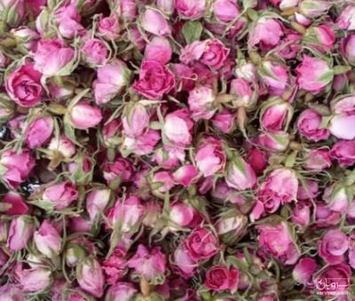 قیمت خرید عمده  گل محمدی