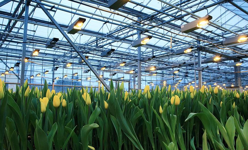 گیاهان زینتی محصولات گلخانه ای سروبان