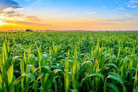 محصولات کشاورزی | سروبان