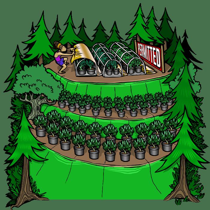بهترین محصول گلخانه ای | سروبان