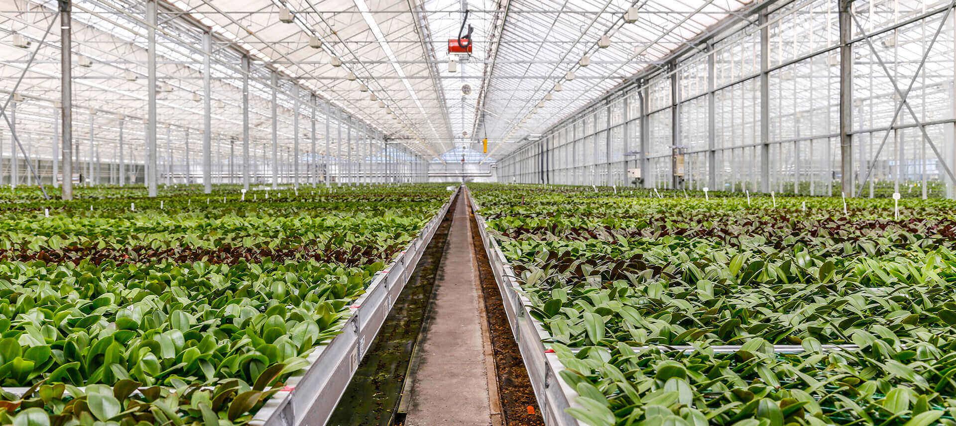 محصولات گلخانه ای در ایران | سروبان