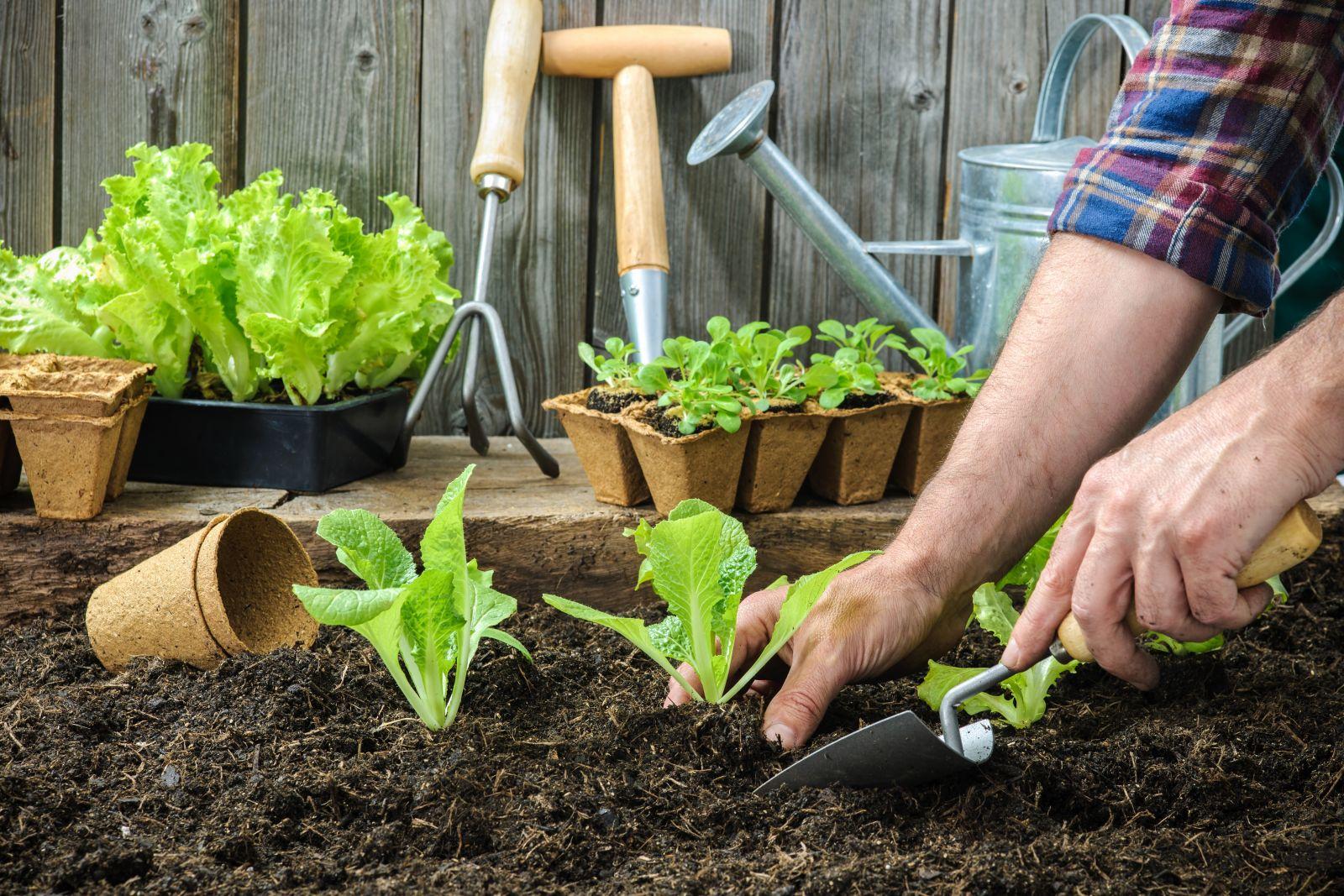 کاشت سبزیجات | سروبان