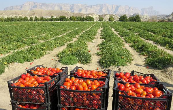 سرپرست زراعت سازمان جهاد کشاورزی