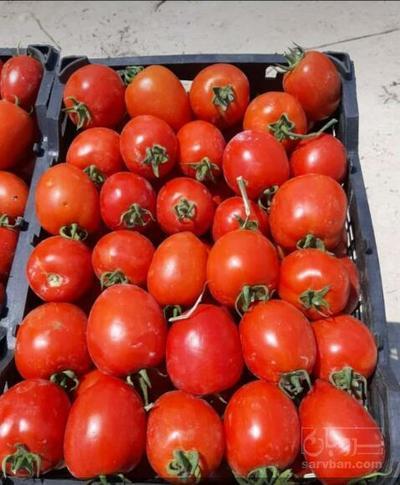 قیمت روز و فروش گوجه فرنگیعمده