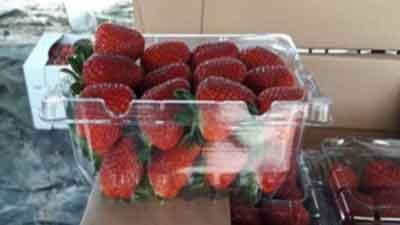 قیمت روز، خرید و فروش توت فرنگی