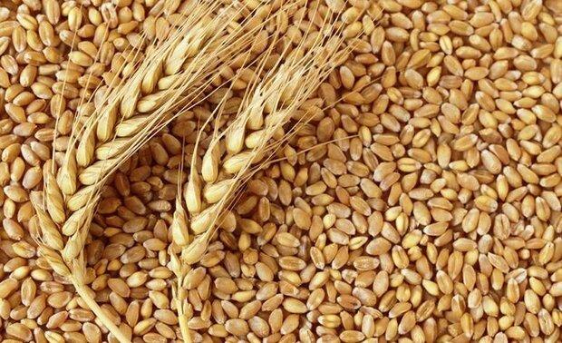 سهم-گندم-در-تولید-ناخالص-کردستان